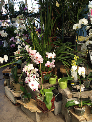Orchids e-mail