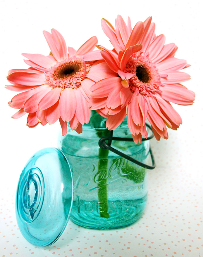Gerbera Daisies edit e-mail