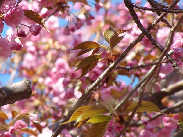 Karen blossoms