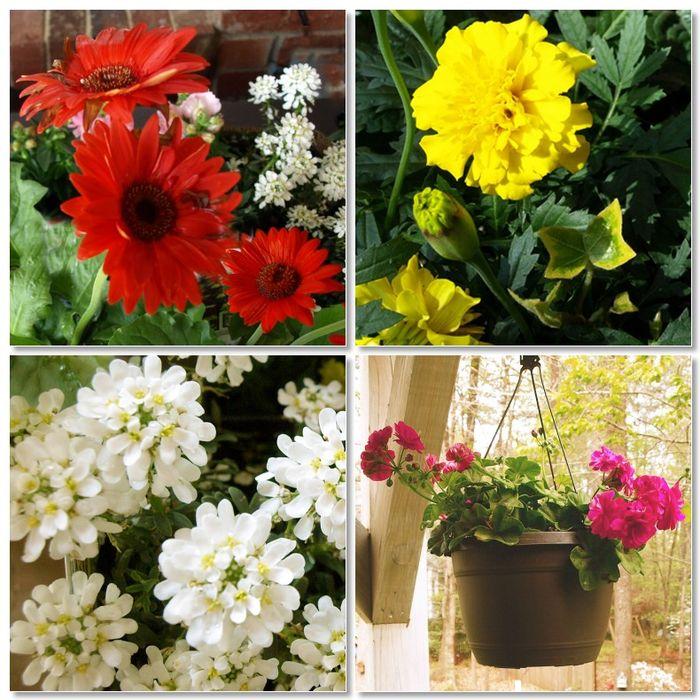 Spring Flowers 2012 2