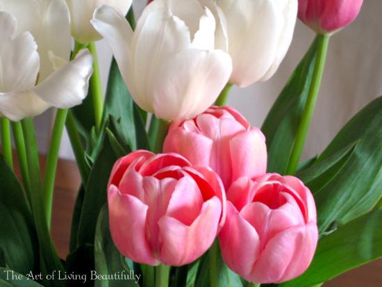 Eileen-tulips