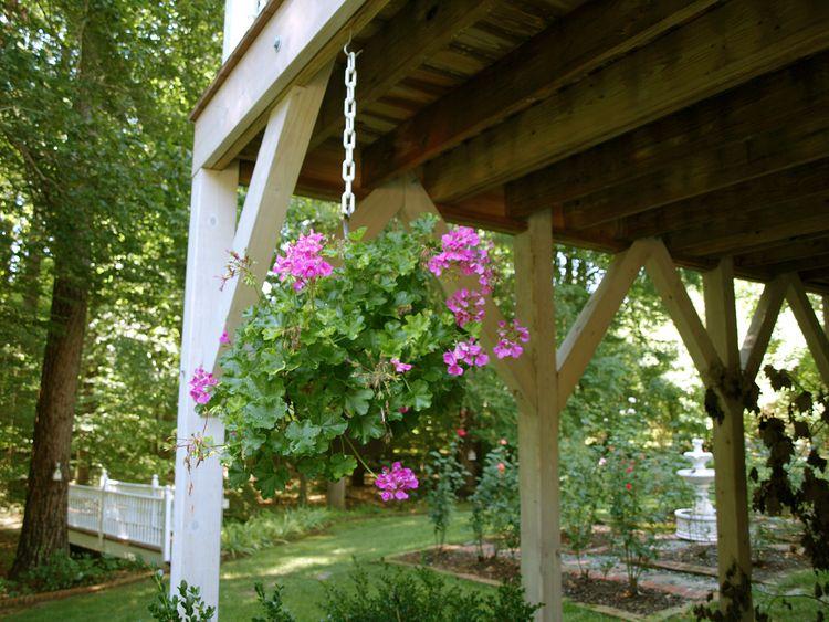 Hanging Geranium