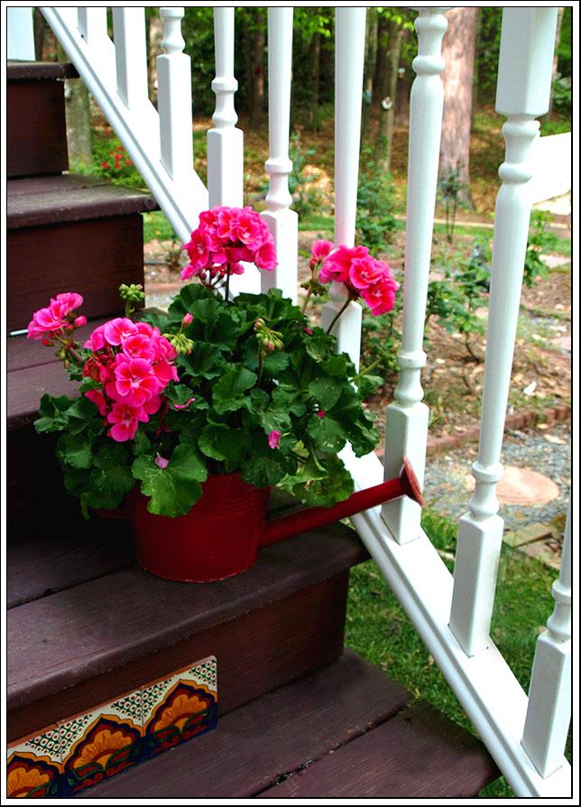 Pink Geranium Steps 003 ee