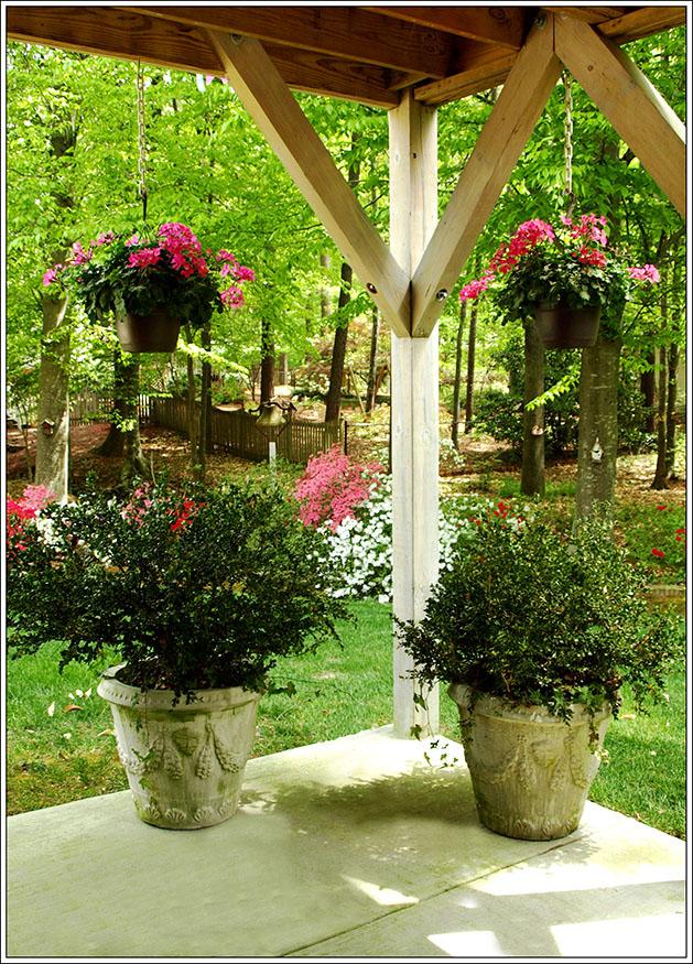 Pink Geraniums Terrace 1 ee