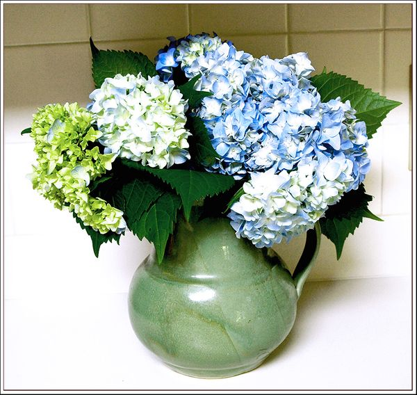 Hydrangeas in the Kitchen ee 006