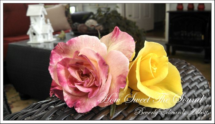 Gift from the garden e