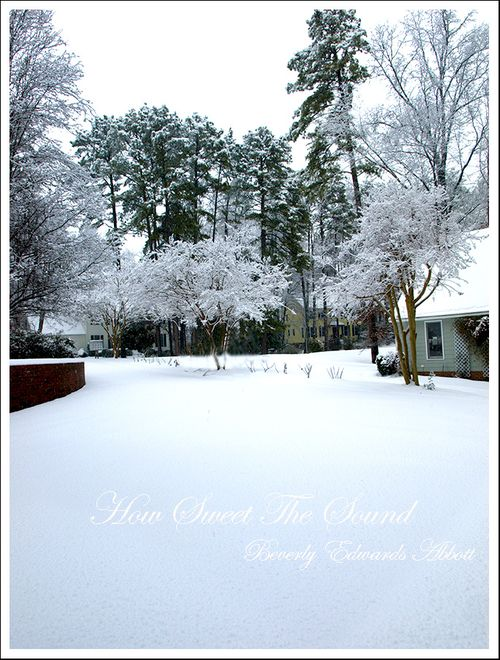 Crepe Myrtles in the Snow
