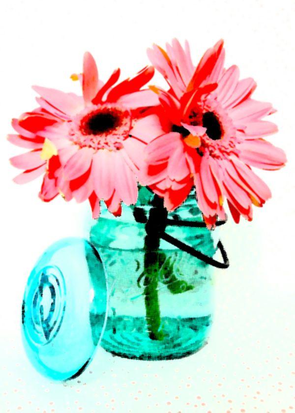 Gerbera Daisies art