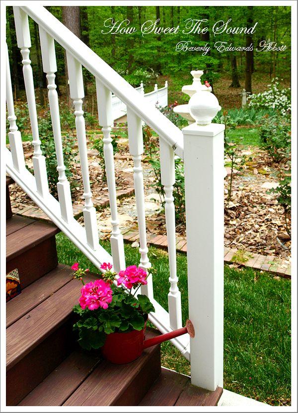Pink Geraniums and Rose Garden