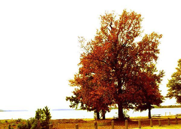 Autumn 006 edit e-mail