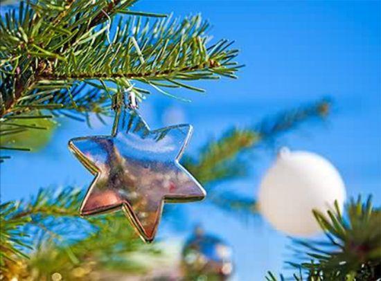 Star on Pine