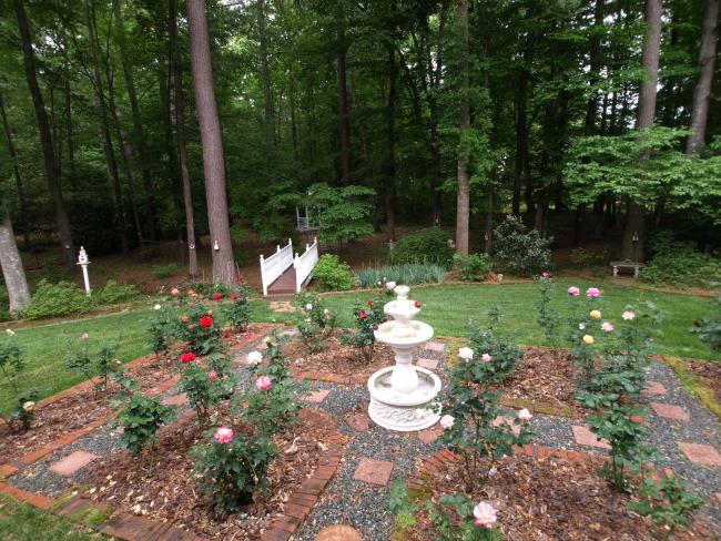 Rose Garden (8)