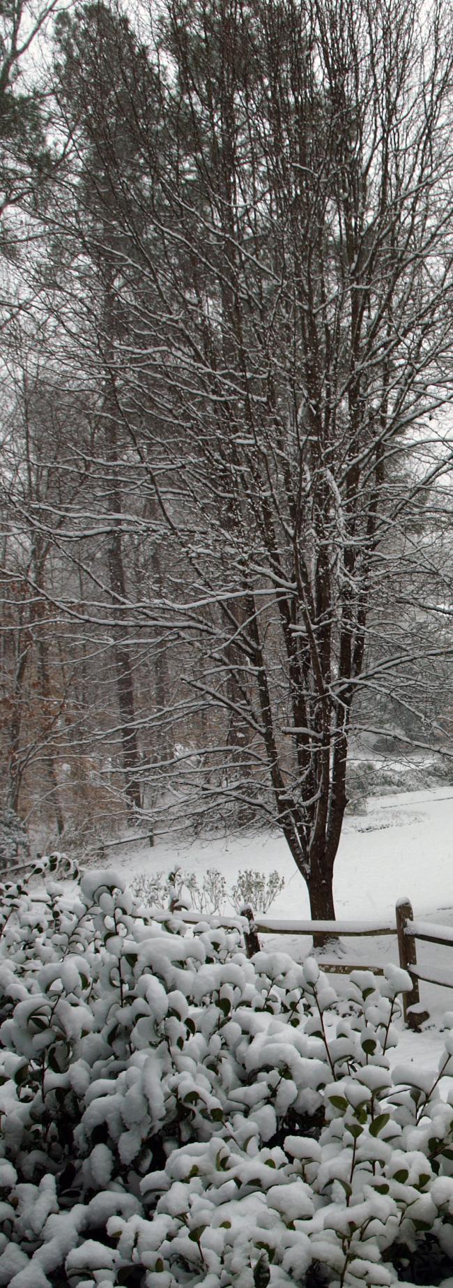 First Snow edit 018