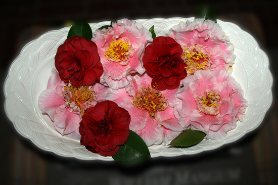 Camellias_015_edit_email_2